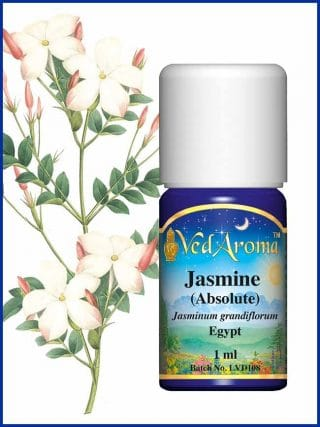jasmine-absolute-essential-oil