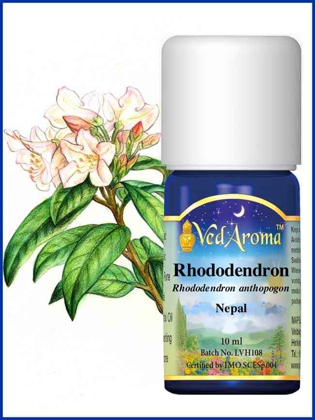 rhododendron-essential-oil