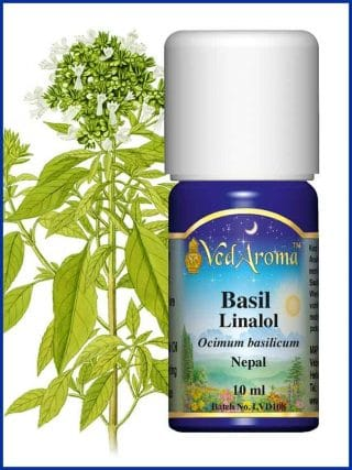 basil-linalol-essential-oil