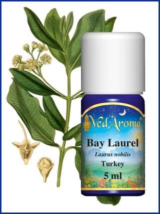 bay-laurel-essential-oil