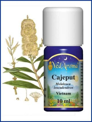 cajeput-essential-oil-vietnam