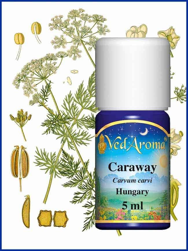 caraway-essential-oil