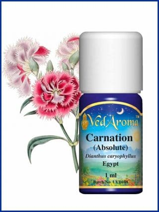 carnation-absolute essential oil
