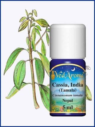 cassia-india-tamala-essential-oil