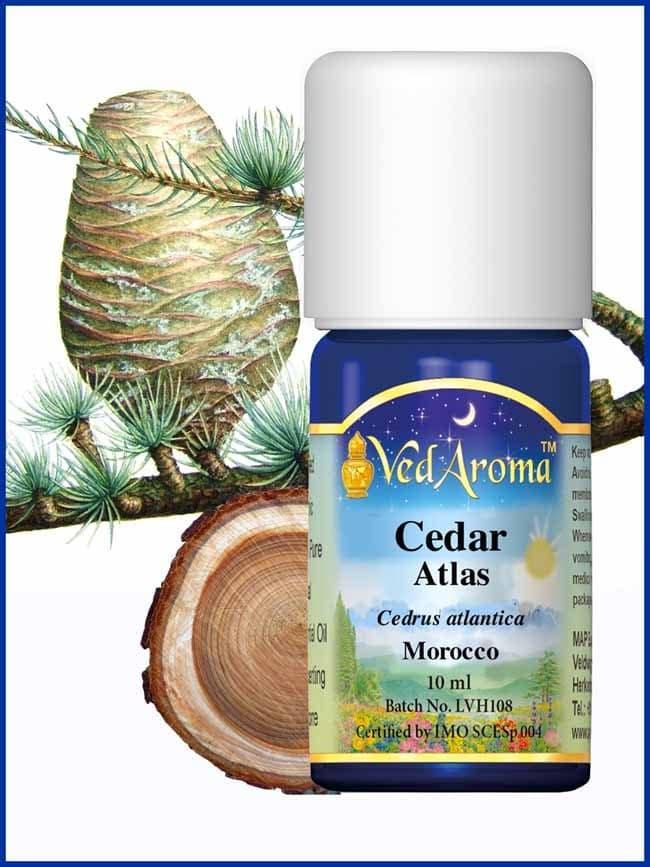 cedar-atlas-essential-oil