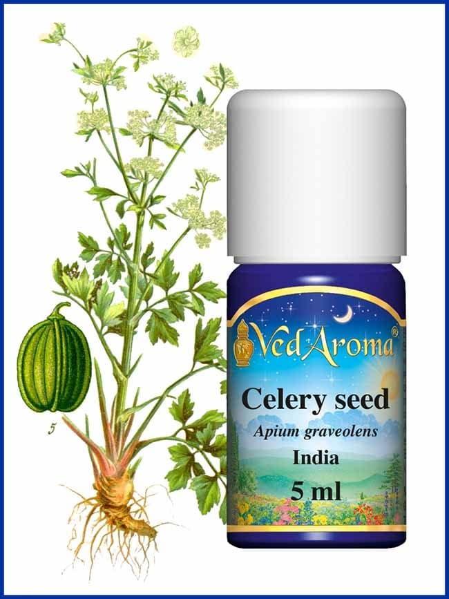 celery-seed-essential-oil