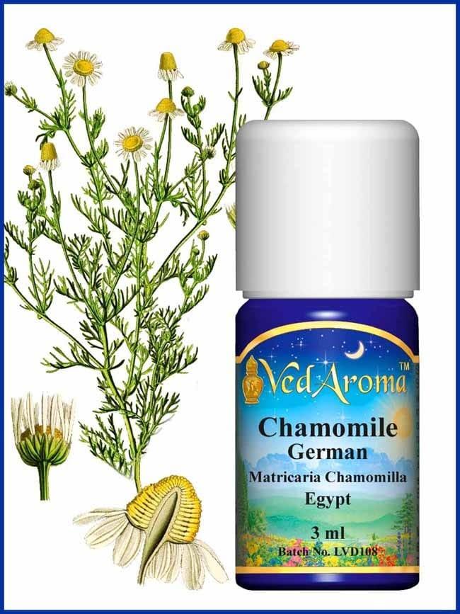 chamomile-german-essential-oil