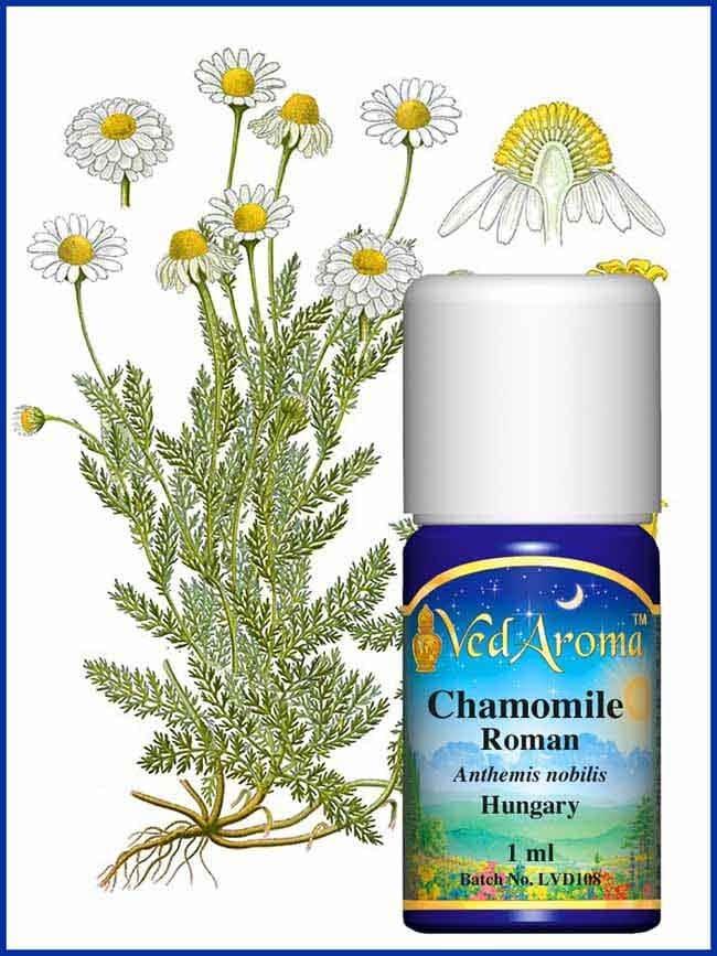 chamomile-roman-essential-oil