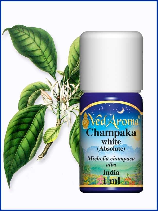 champaka-white-absolute