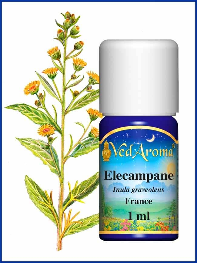 elecampane-Inula-essential-oil