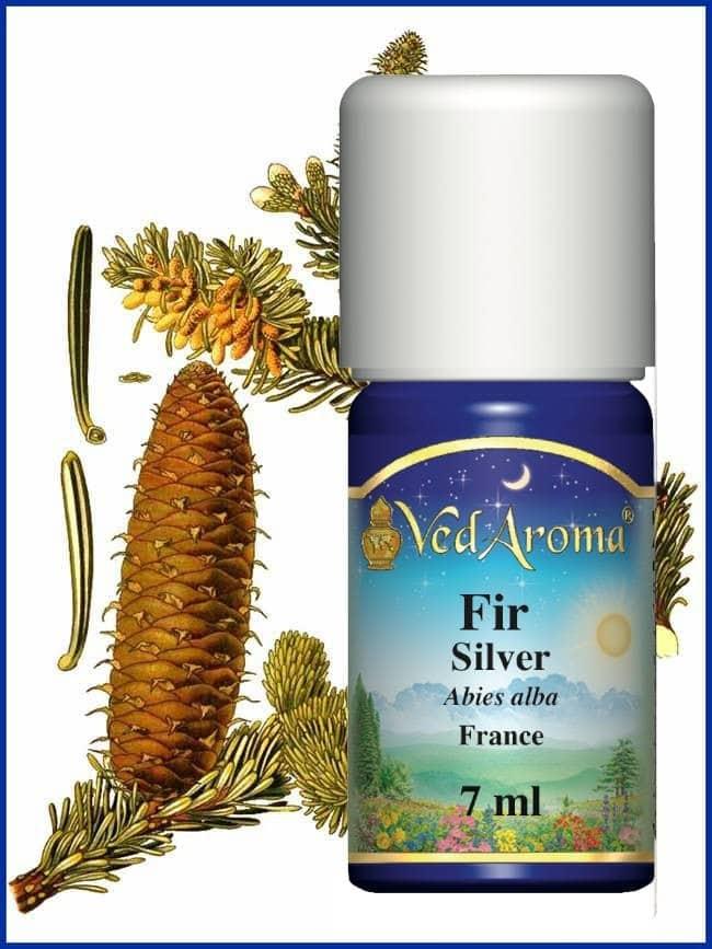 fir-silver abies alba essential oil