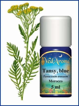 tansy-blue-essential-oil