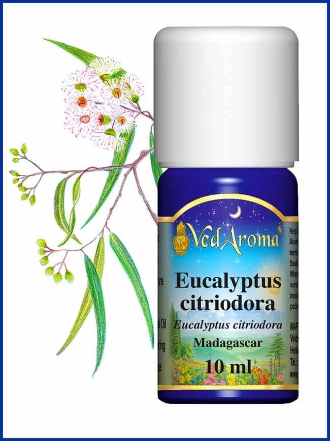 eucalyptus-citriodora-essential-oil