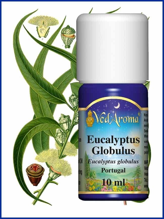 eucalyptus-globulus-essential-oil