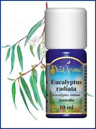 eucalyptus-radiata-essential-oil