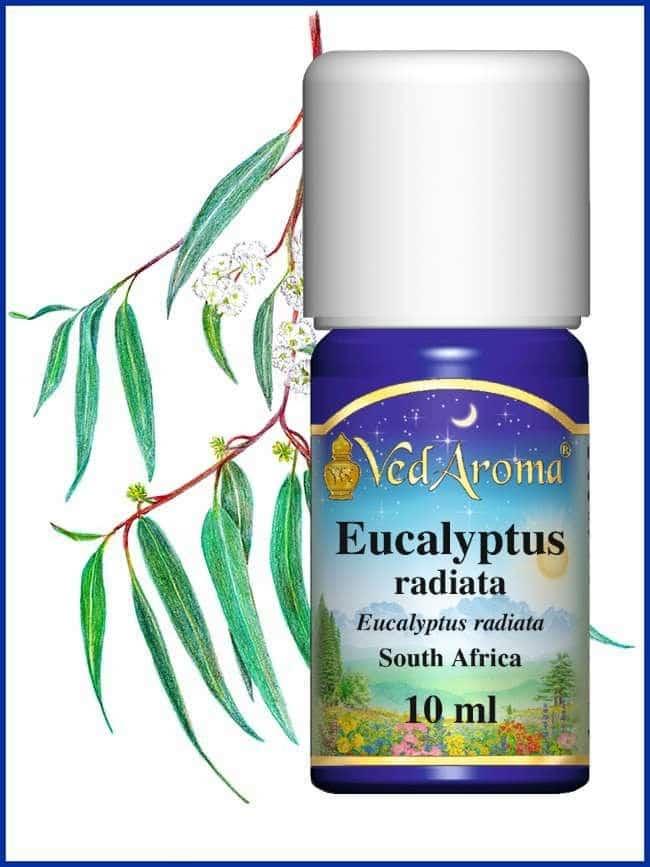 eucalyptus-radiata-essential-oil-africa
