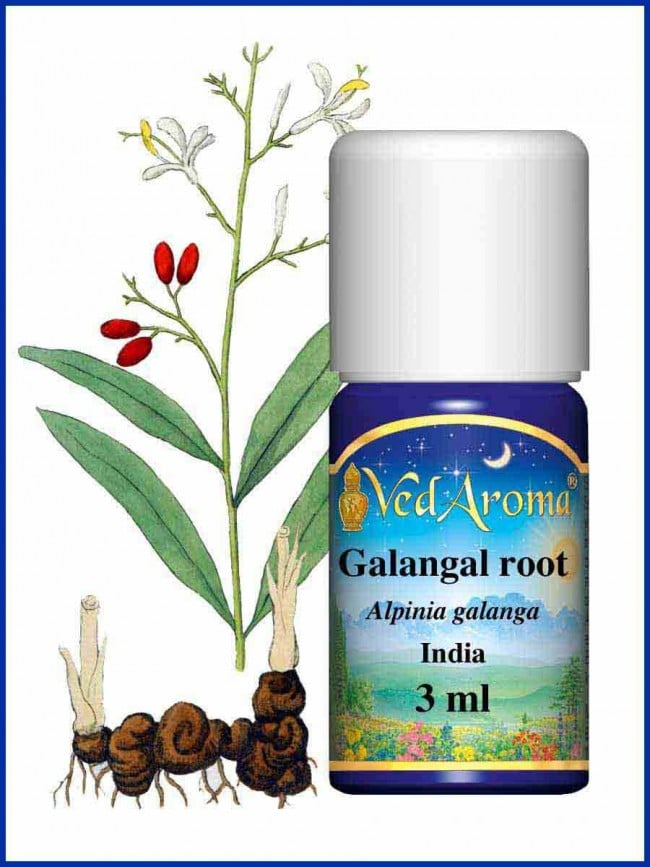 galangal-root-essential-oil_1_1