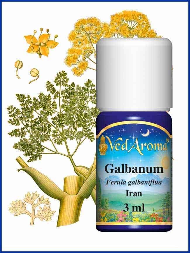 galbanum-essential-oil