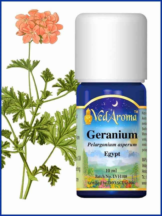 geranium-rose-essential-oil
