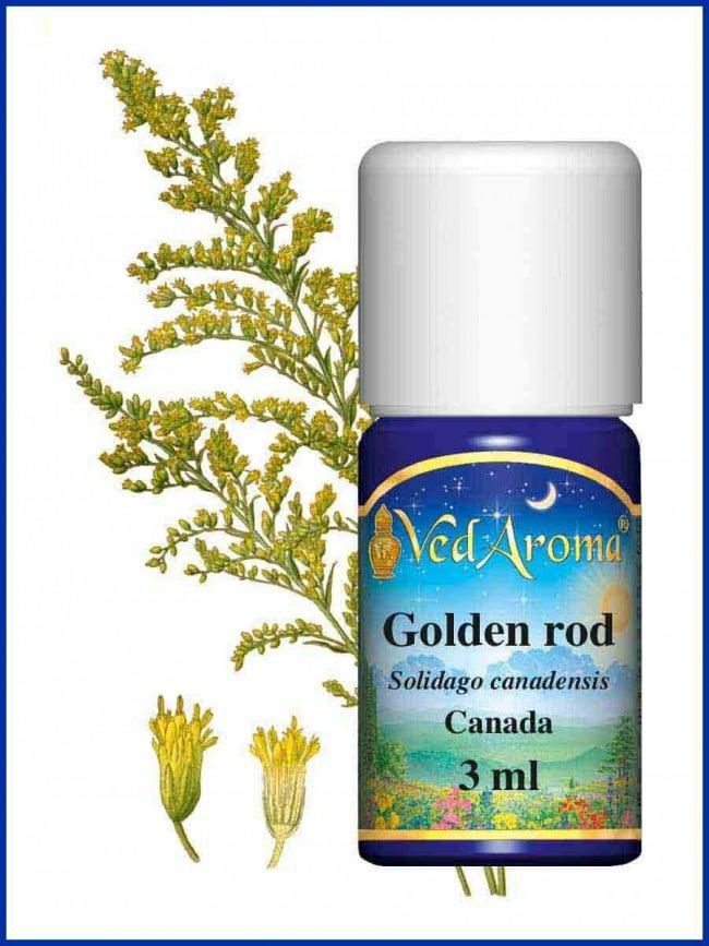 golden-rod-essential-oil