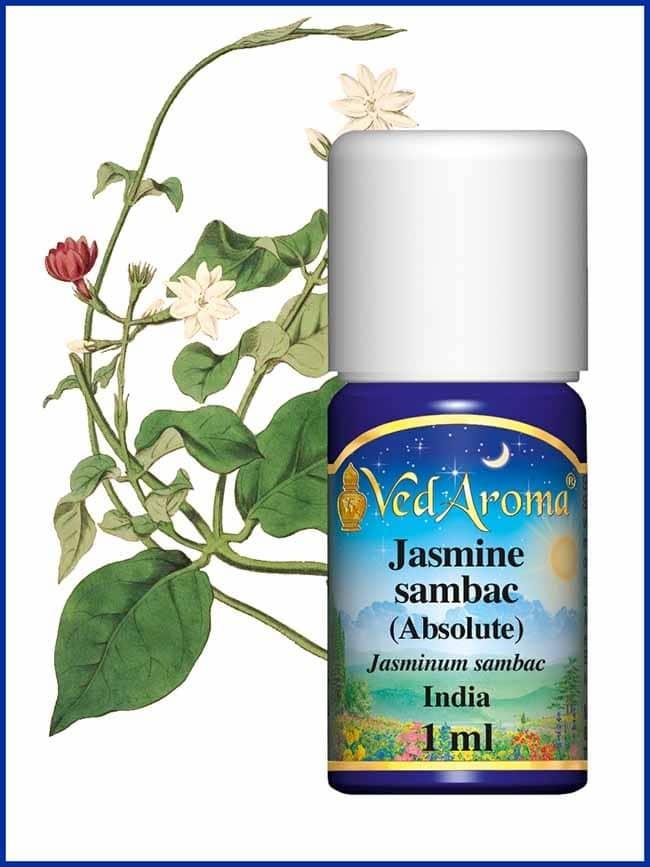jasmine-sambac-absolute essential-oil