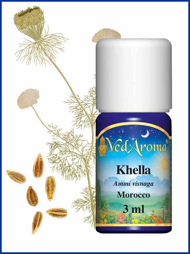 khella-ammi-essential-oil