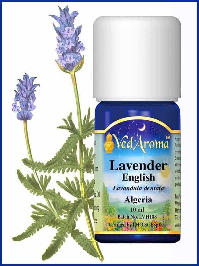 lavender-english-essential-oil-algeria