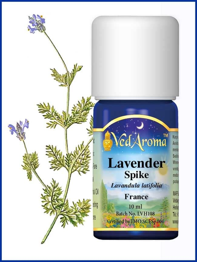 lavender-spike-essential-oil