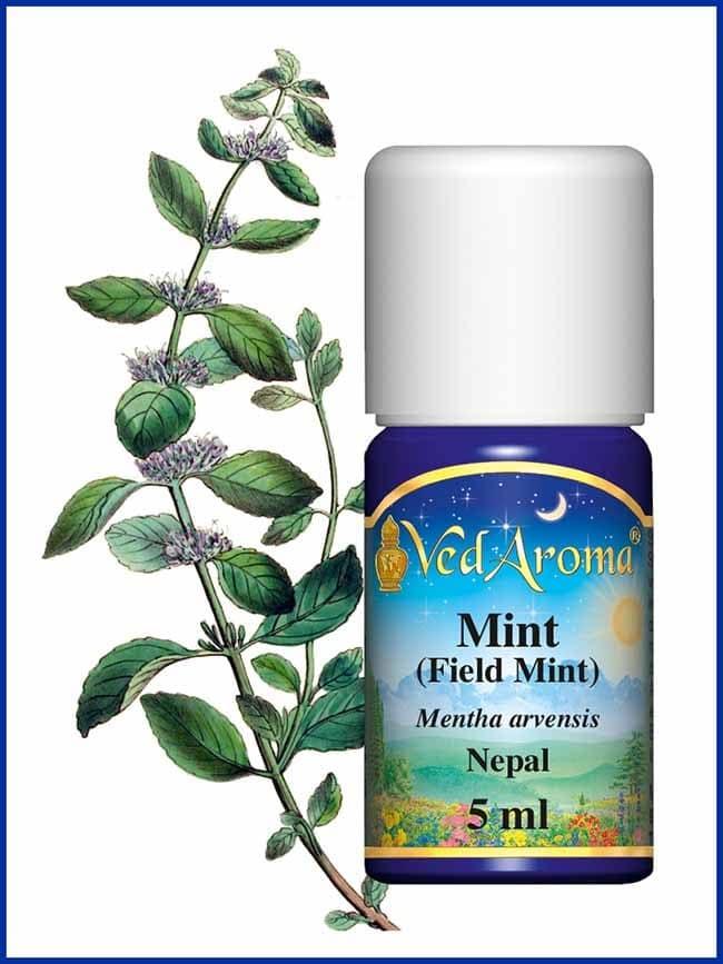 mint-field-mint-essential-oil