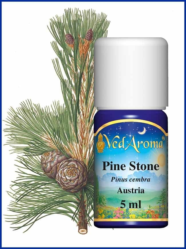 pine-stone-essential-oil