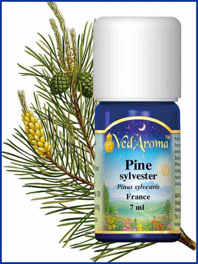 pine-sylvester-essential-oil