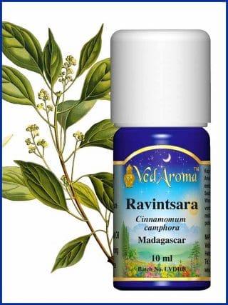 ravintsara-essential-oil