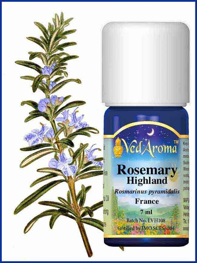 rosemary-highland-essential-oil
