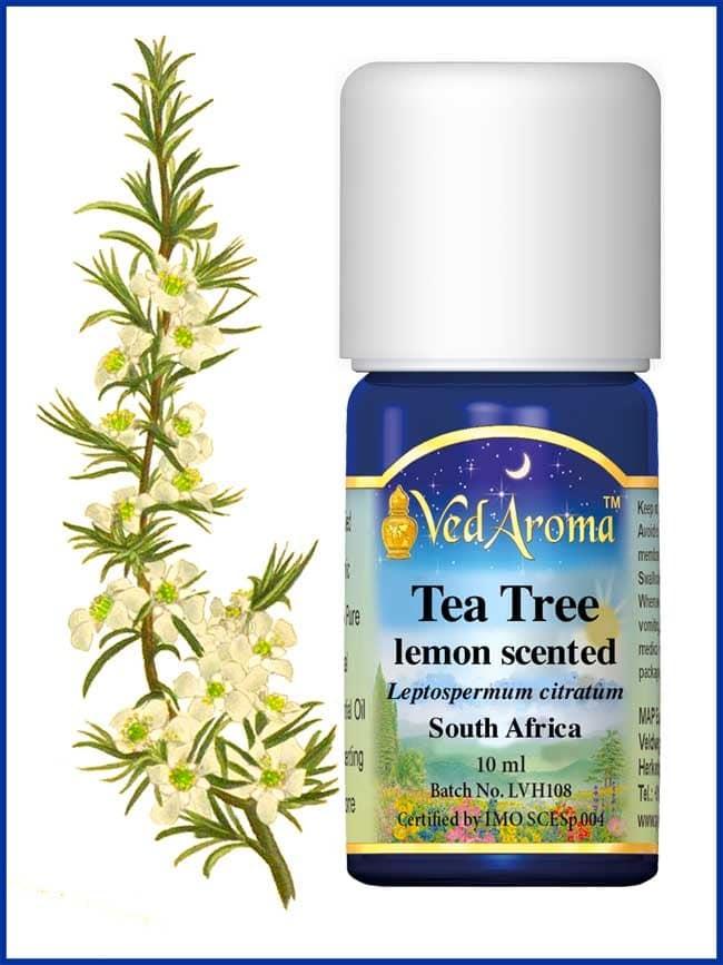 tea-tree-lemon-scented-essential-oil
