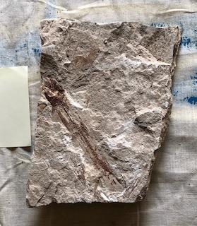 Fossil Fish 102