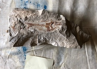 Fossil Fish 106