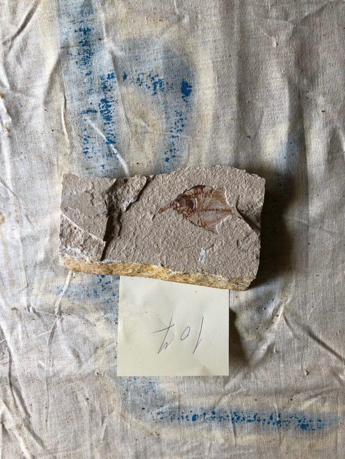 Fossil Fish 107