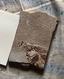 Fossil Fish 112