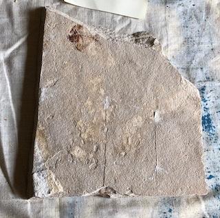 Fossil Fish 115