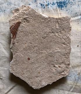 Fossil Fish 121-2