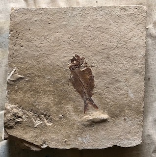 Fossil Fish 22