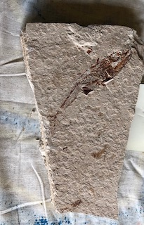 Fossil Fish 42