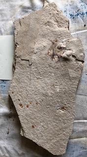 Fossil Fish 45