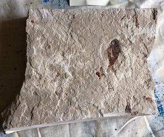 Fossil Fish 50