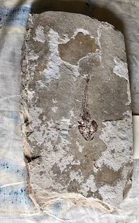 Fossil Fish 55
