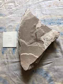 Fossil Fish 69