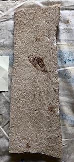 Fossil Fish 79