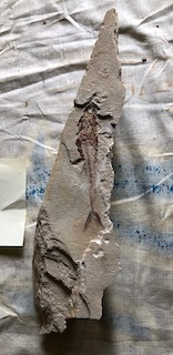 Fossil Fish 84