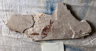 Fossil Fish 90