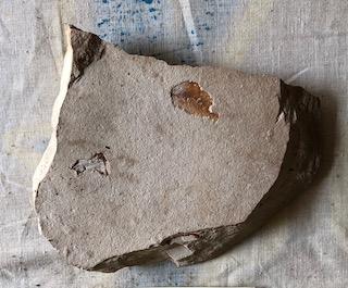 Fossil Fish 92-2